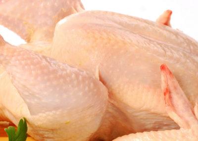 Friskslagtet kylling